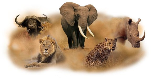 Rain and the Healing the big five